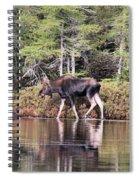 Moose_0586 Spiral Notebook