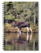 Moose_0587 Spiral Notebook