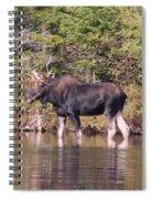 Moose_0591b Spiral Notebook