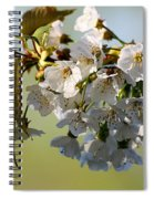 More Spring Flowers Spiral Notebook