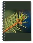 More Spruce Buds Spiral Notebook