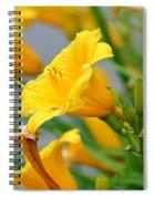 Morning Daylilies Spiral Notebook
