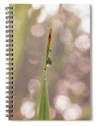 Morning Dew On A Grass Spiral Notebook