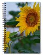 Morning Field Of Sunflowers Spiral Notebook