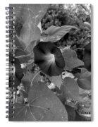 Morning Glory 06 Spiral Notebook