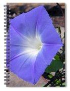 Morning Glory Spiral Notebook