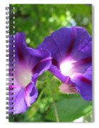 Morning Glory Couple Or 2 Purple Ipomeas Spiral Notebook