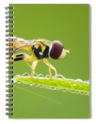 Morning Hoverfly Spiral Notebook