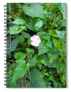 Morning Magenta Glow Spiral Notebook