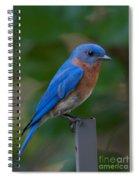 Morning Perch Spiral Notebook