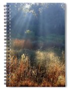 Morning Rays Through Live Oaks Spiral Notebook