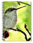 Morning Surprise Spiral Notebook