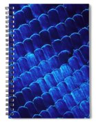 Morpho Butterfly Scales Spiral Notebook