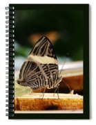 Mosaic Butterfly Spiral Notebook