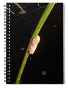 Mosquito Eggs In Teh Pantenal Spiral Notebook