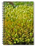 Moss And Fruiting Bodies - Green Lane Pa Spiral Notebook