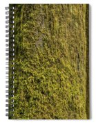 Moss Covered Tree Olympic National Park Spiral Notebook