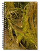 Moss-covered Tree Trunks  Spiral Notebook