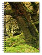 Moss Covered Trees In A Forest Spiral Notebook