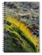 Moss In The Light Spiral Notebook