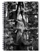 Moss On The Evergreens II In Black And White Spiral Notebook