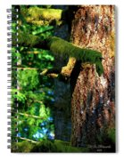 Moss On The Evergreens Spiral Notebook