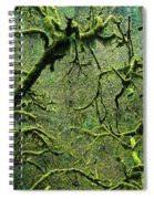 Mossy Trees Leafless In The Winter Spiral Notebook