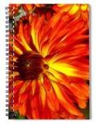 Mostly Orange Dahlia Flower Spiral Notebook