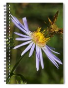 Moth Feeding On Aster Dragon Spiral Notebook