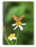 Moth On Weed Spiral Notebook