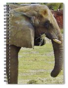Mother Elephant Spiral Notebook