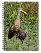 Mother Limpkin And Colt Spiral Notebook