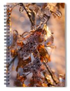 Mother Nature's Christmas Decorations - Golden Oak Leaves Jewels Spiral Notebook