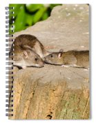 Mother Rat With Youngster Spiral Notebook