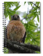 Mother Red Shouldered Hawk Spiral Notebook