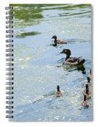 Mother Wood Duck Spiral Notebook
