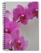 Mottled Orchid 1 Spiral Notebook
