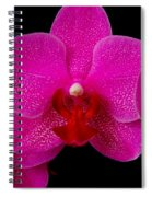 Mottled Orchid 8 Spiral Notebook