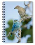 Mountain Bluebird Pair Spiral Notebook