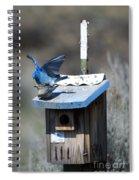 Mountain Bluebirds Mating Spiral Notebook