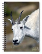Mountain Goat Feeding Spiral Notebook