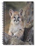 Mountain Lion Cub Spiral Notebook