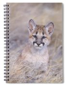 Mountain Lion Cub In Dry Grass Spiral Notebook