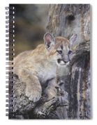 Mountain Lion Cub On Tree Branch Spiral Notebook