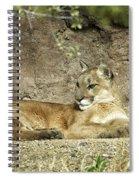 Mountain Lion Spiral Notebook