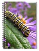 Mountain Monarch 2 Spiral Notebook