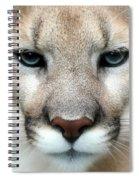 Mountian Lion Spiral Notebook