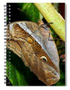 Mournful Owl Butterfly Spiral Notebook