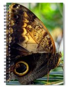 Mournful Owl Butterfly In Sunlight Spiral Notebook
