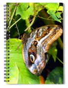 Mournful Owl Butterfly Wings Spiral Notebook